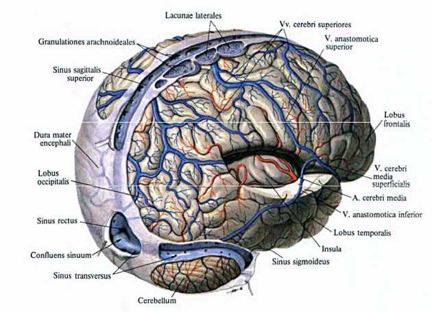 Нарушение венозного оттока головного мозга у детей: лекарства, признаки, рецепты, фото